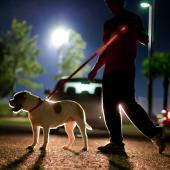 "Red Nylon Universal Double Sided LED 58"" Light up Leash - Provides Great Safety!"